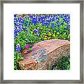 Boulder And Bluebonnets Framed Print