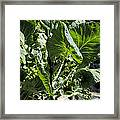 Bountiful Brussel Sprouts Framed Print