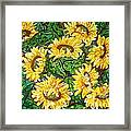 Bountiful Sunflowers Framed Print