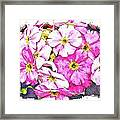 Bouquet Of Pink Framed Print