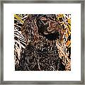 Boykin Spaniel Portrait Framed Print