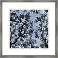 Branches Across Framed Print