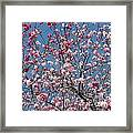 Branches And Blossoms Framed Print