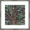 Branches Of Brio Framed Print