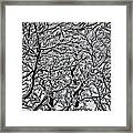 Branches Of Our Life Framed Print