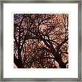 Branching Out At Sunset Framed Print