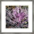 Brassica Framed Print