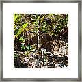 Breadfruit Tree Framed Print