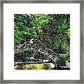 Bridge Over Framed Print by Cary Shapiro