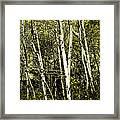 Briers And Brambles Framed Print