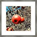 Bright Apples Framed Print