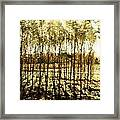 Bright Forest - Bosque Luminoso Framed Print