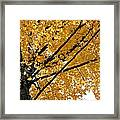 Bright Yellow Leaves Framed Print