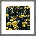Brillant Flowers Full Of Sunshine. Framed Print