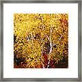 Brilliance Of Autumn On Rib Mountain Framed Print