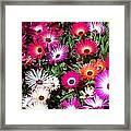 Brilliant Flowers Framed Print