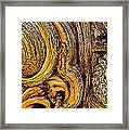 Bristlecone Pine Bark Detail White Mountains Ca Framed Print