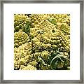 Broccoflower Framed Print