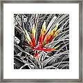 Bromeliad 1 Framed Print