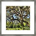 Brookgreen Gardens Framed Print