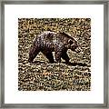 Brown Bears Framed Print by Angel Jesus De la Fuente