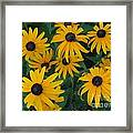 Brown Eyed Susans Framed Print