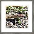 Brown Snake Framed Print