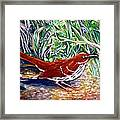 Brown Thrasher In Sunlight Framed Print