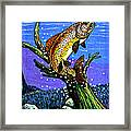 Brown Trout Framed Print