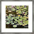 Bruges Lily Pond Framed Print