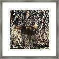 Buck In The Woods Framed Print