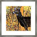 Buck Scouting For Doe Framed Print