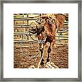 Bucking Framed Print by Caitlyn  Grasso