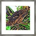 Bufo Toad Framed Print