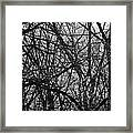 Buildings And Trees Framed Print
