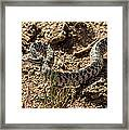 Bull Snake Framed Print