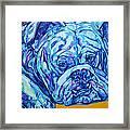 Bulldog Blues Framed Print