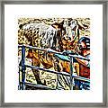 Bullrider And His Bull Framed Print