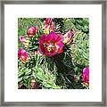 Bumble Cactus Flower Framed Print