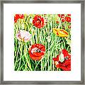 Bunch Of Poppies II Framed Print