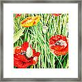 Bunch Of Poppies IIi Framed Print