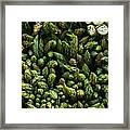 Bunches Of Asparagus On Display At The Farmers Market Framed Print