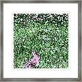 Bunny Rabbit Digital Paint Framed Print
