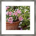 Bursting With Blooms Framed Print