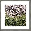 Bush With The Background In Cherry Klarenbeek Park In Arnhem Netherlands Framed Print