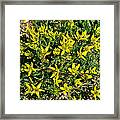 Buttercups In Cappadocia-turkey Framed Print