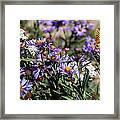 Butterflies And Wildflowers Framed Print