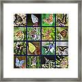 Butterflies Squares Collage Framed Print