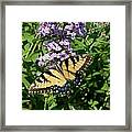 Butterfly 135 Framed Print