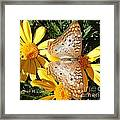 Butterfly And Daisies Framed Print